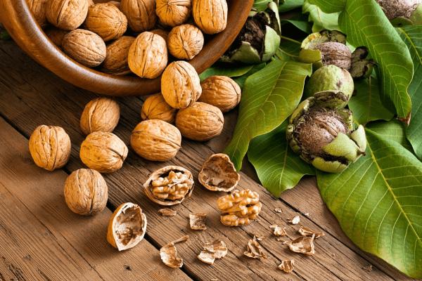 Walnuts For Brain Power